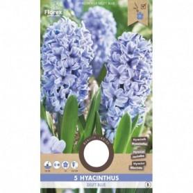 Bloembol (VJ) Hyacinth Delft Blauw 15/1 5 stuks