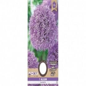 Bloembol (VJ) Allium Gladiator 18/20 1st.