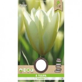 Bloembol (VJ) Tulp Fosteriana Purissima 12/+ 8 st
