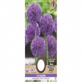 Bloembol (VJ) Allium Purple Sensation 10/12 3 St.