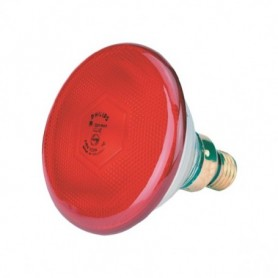 Biggenlamp rood Philips 175 w