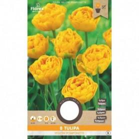 Bloembol (VJ) Tulp Triumph Holland Beauty 12+ 8 st