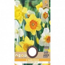 Bloembol (VJ) Narcis Mixed mixed 5