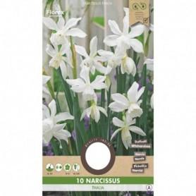 Bloembol (VJ) Narcis Thalia 5