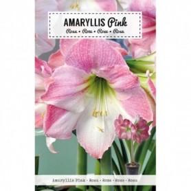 Bloembol (VJ) Amaryliss Roze 1 st